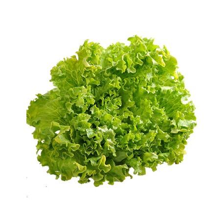 Salade : Batavia 1 p
